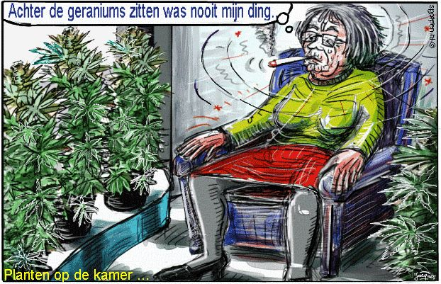 Cannabis hennep  soft drugs marihuana